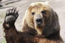 Bear, voting